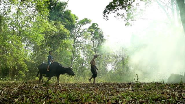 HD: Asian farmer walking with his buffalo.