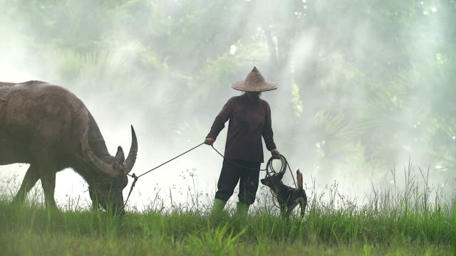 Asian farmers working with his dog and buffalo in the ricefield.