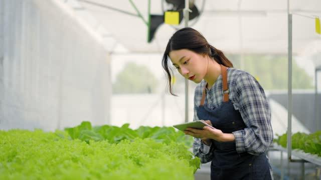 アジアの女性の若い農家は、彼女の手で温室で成長している水耕栽培農場でサラダ野菜をチェックし、農業農場や果物製品の私たちの中小企業で品質管理のためのデジタルタブレットで行う� - 水栽培点の映像素材/bロール