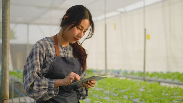 asian female young farmer walking to checking on the salad vegetable on a hydroponic farm growing in the greenhouse with her hand and love to do on a digital tablet for quality control in our small business of agricultural farm under sunset. - inspector stock videos & royalty-free footage