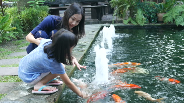 asian girl and mother feeding food for carp fish in pond - fountain stock videos & royalty-free footage