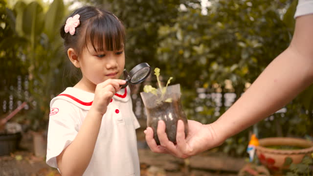 asian girl are using a magnifying glass find insects in the bushes. - magnification stock videos & royalty-free footage