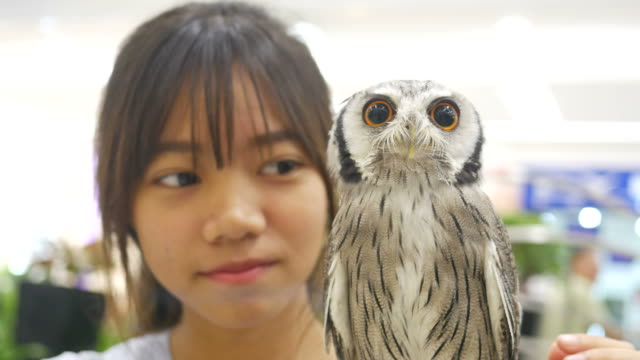 asian girl play with big owl - parte del corpo animale video stock e b–roll