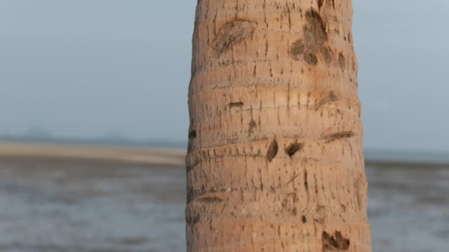 asian girl playing hide and seek on the beach behind coconut tree - hide and seek stock videos and b-roll footage