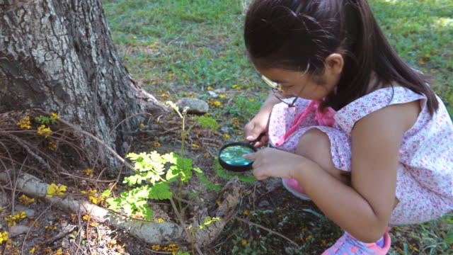 asian girl study nature by looking at through magnifying glass in park - lente d'ingrandimento video stock e b–roll