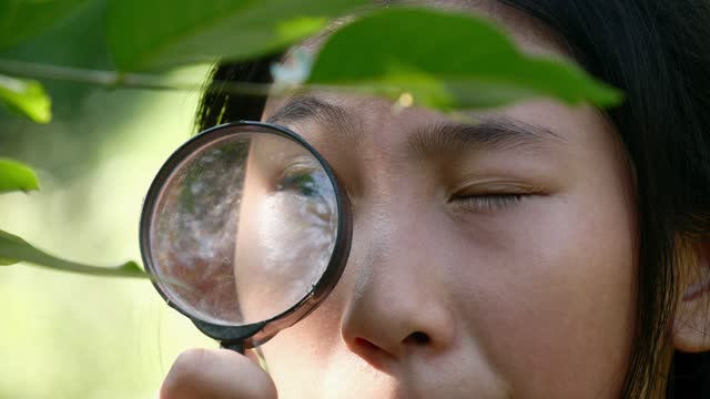 asian girl using magnifying glasses for nature reserve in the forest during adventure outdoor. - named wilderness area stock videos & royalty-free footage
