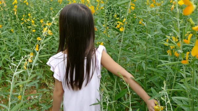 asian girl walking through sunhemp field - wide stock videos & royalty-free footage