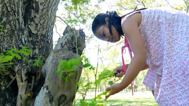 公園で拡大鏡で昆虫を見てアジアの女の子 - 虫除け点の映像素材/bロール