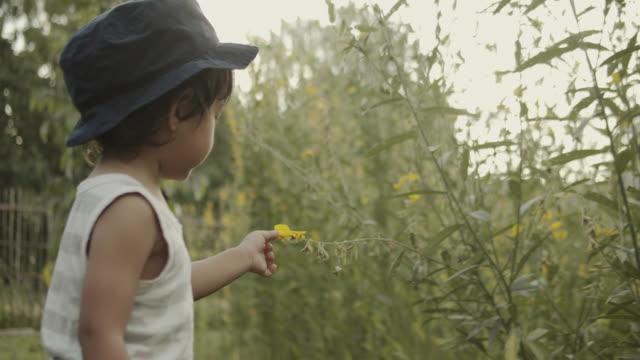 vidéos et rushes de enfant asiatique odeur des fleurs dans le jardin - curiosité
