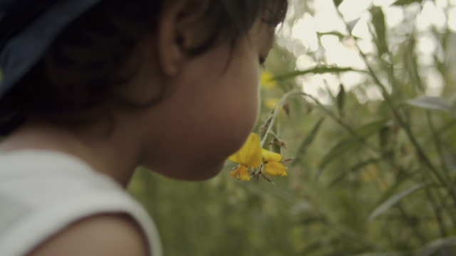 asian kid smelling flower in the garden - smelling stock videos and b-roll footage