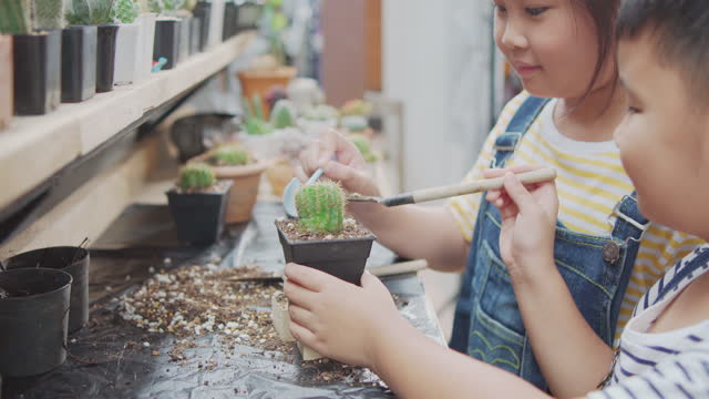 asian kids planting small cactus happily during his holiday activities at  home small cactus garden. - environment stock videos & royalty-free footage