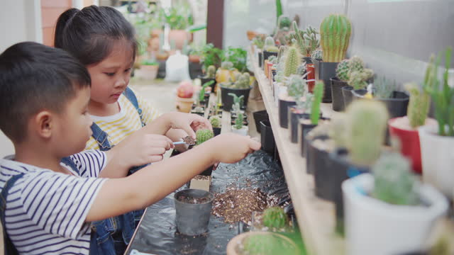 asian kids planting small cactus happily during his holiday activities at  home small cactus garden. - succulent stock videos & royalty-free footage