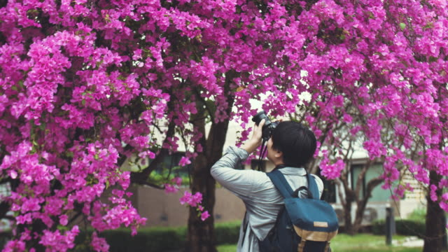 Asian man photographer is taking a picture of violet flower blossom tree