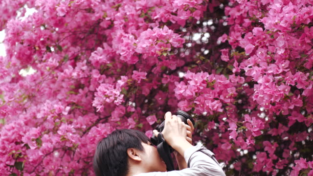 Asian man photographer is taking a picture of violet flower tree