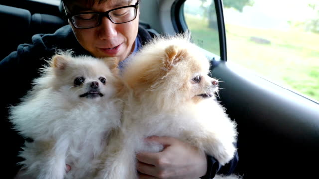 asian man playing with his dogs in back seat of the car - animal head stock videos & royalty-free footage
