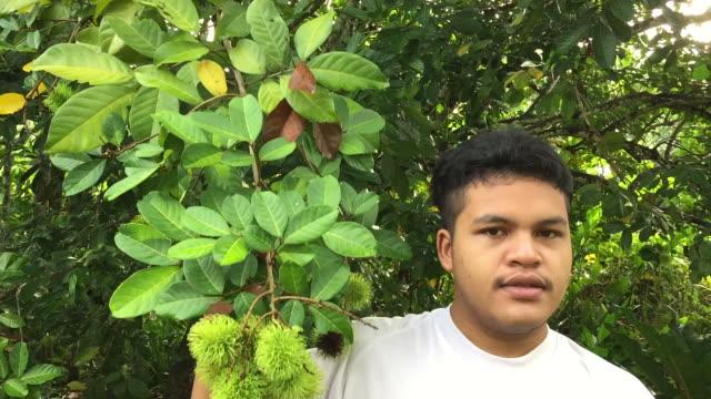 vídeos de stock, filmes e b-roll de homem asiático mostrar o rambutan frutas cresce em árvore no jardim - braço humano