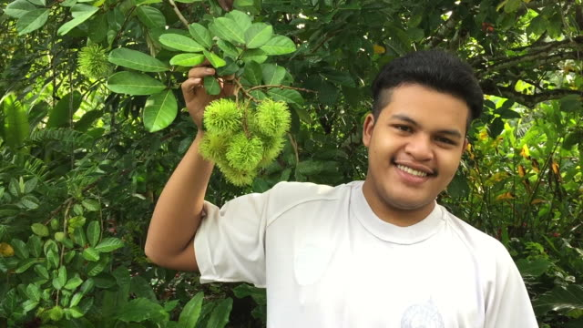 asian man show rambutan fruits growing on tree in garden - tropical tree stock videos and b-roll footage