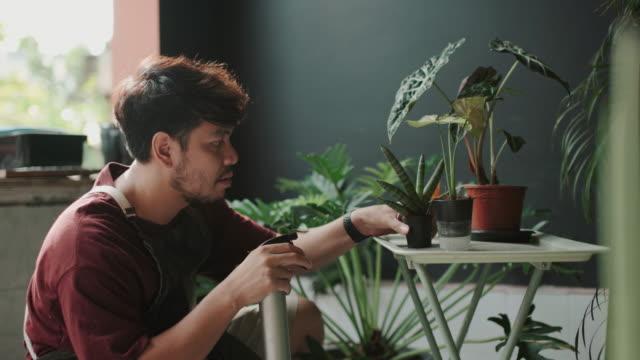 vídeos de stock e filmes b-roll de asian man spray watering to the plants at home - colocar planta em vaso