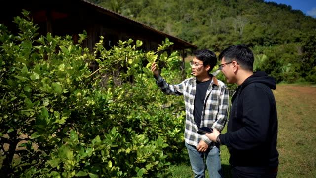 slomo - asian man taking photo of lime - organic farm stock videos & royalty-free footage
