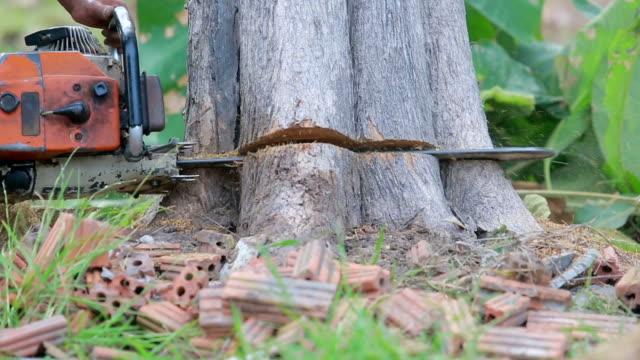 vídeos de stock, filmes e b-roll de homem asiático woodcutter cortar árvores com serra de cadeia - serra elétrica