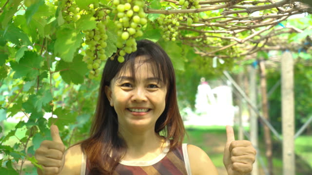 asian mature woman farmer checking grapes on tree  , gmo food , biofood concept , thumbs up , good condition - good condition stock videos & royalty-free footage