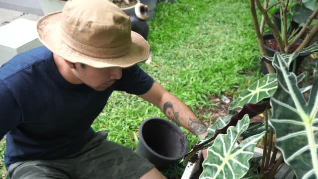 asian men do gardening, grow trees. - 35 39 years stock videos & royalty-free footage