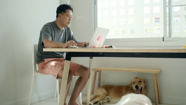 asian men working in the house, and playing with pets. - chair stock videos & royalty-free footage