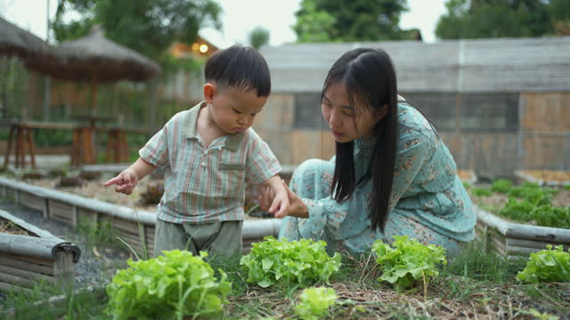 asian mother and son working in the vegetable garden. - preschool stock videos & royalty-free footage
