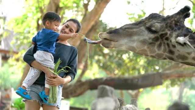 asiatische mutter halten baby junge giraffen füttern. - füttern stock-videos und b-roll-filmmaterial