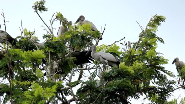 スキバシコウ鳥 - 木を抱く点の映像素材/bロール