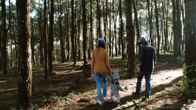 asian parents and baby walking past in a forest - pine stock videos & royalty-free footage