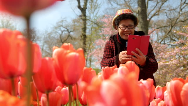 asian people using smartphone for take tulip flower in keukenhof. - netherlands stock videos & royalty-free footage