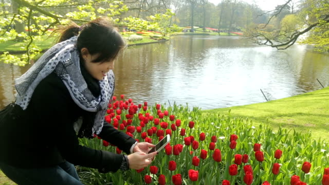 asian people using smartphone for take tulip flower - photographing stock videos and b-roll footage