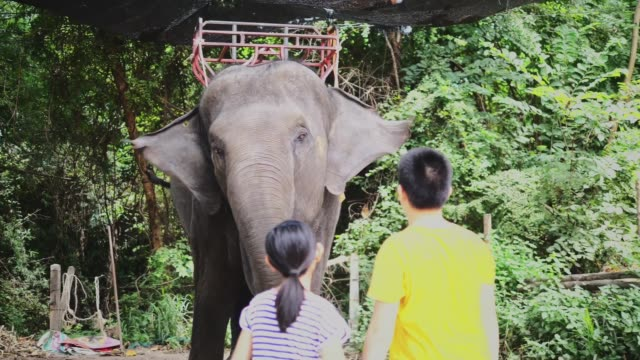 asian preteen boy and girl feeding banana to big elephant, slow motion. - zoo stock videos & royalty-free footage