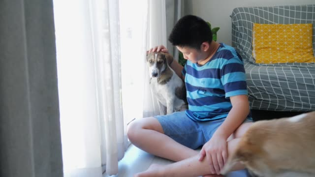 asian preteen boy touching his dog on the floor at home. - overweight dog stock videos & royalty-free footage
