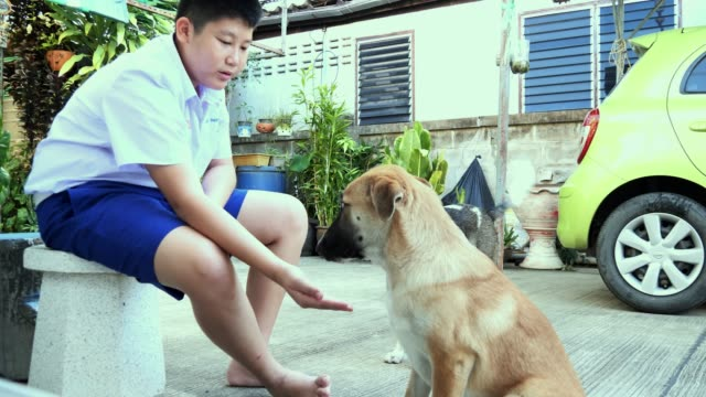 asian schoolboy playing with his dog before go to school in the morning. - overweight dog stock videos & royalty-free footage