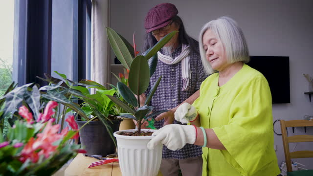 asian senior couple enjoy takes care indoor plants garden at home - plant pot stock videos & royalty-free footage
