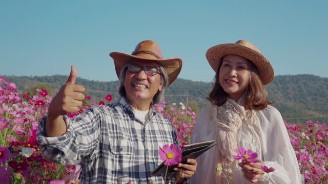 asian senior couple farmer working in cosmos meadow , use digital tablet for checking quality , thumbs up , good condition - good condition stock videos & royalty-free footage