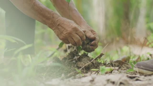 4k asian senior couple planting a tree - dragon tree stock videos & royalty-free footage