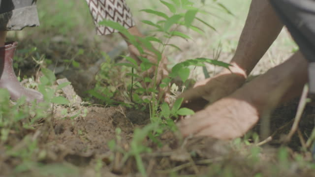 4k asian senior couple planting a tree - reforestation stock videos and b-roll footage