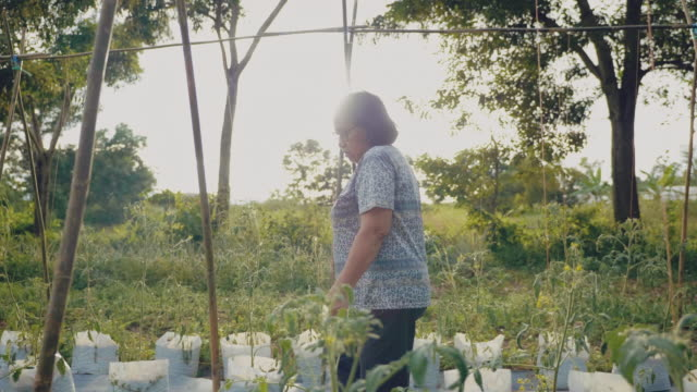 asian senior going on the field for harvesting - gardening stock videos & royalty-free footage