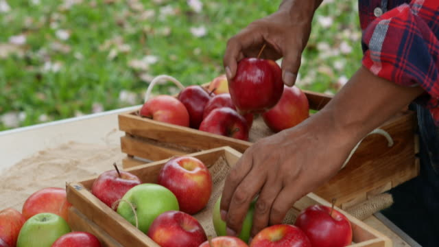 asiatische senior woman prüfung äpfel in hof - 55 59 jahre stock-videos und b-roll-filmmaterial