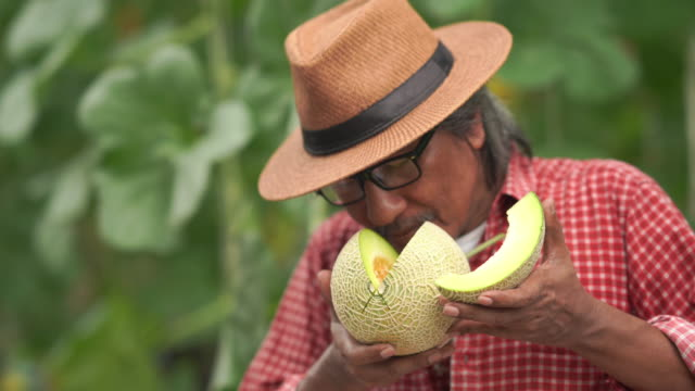 asian senior man farmer tested melon crop varieties for research and development , gmo food , biofood concept , success and good condition , thumbs up - good condition stock videos & royalty-free footage