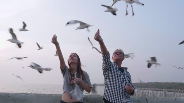 Asian senior man with daughter feeding seagull by hand