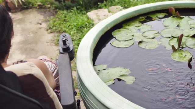 vídeos y material grabado en eventos de stock de mujer asiática mayor en silla de ruedas al aire libre alimentando peces - posa del loto