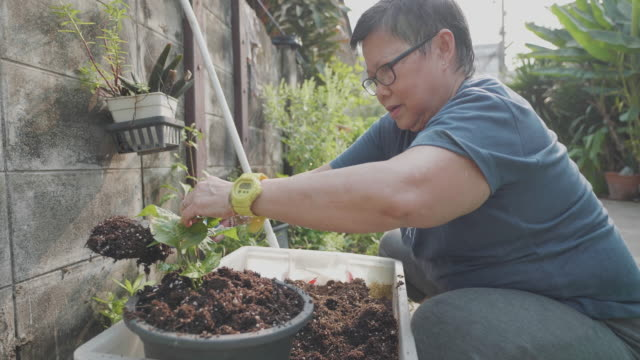 asian senior woman planting in the garden. - flowerbed stock videos & royalty-free footage