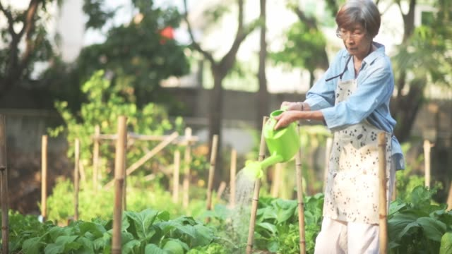 asian senior woman watering and harvesting in organic home vegetable garden - greenhouse stock videos & royalty-free footage