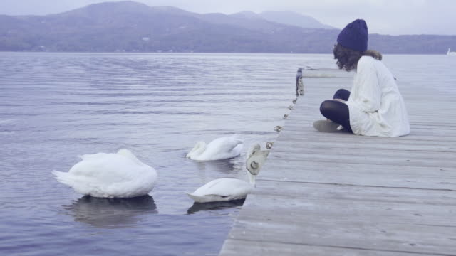 asian tourist woman sitting with swan at lake kawaguchi - swan stock videos and b-roll footage