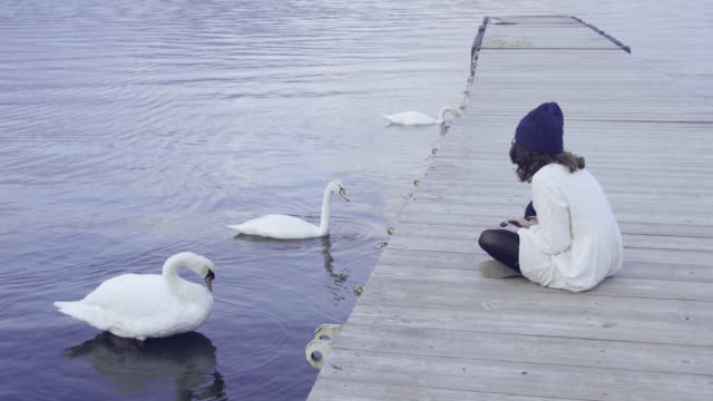 asian tourist woman sitting with swan at lake kawaguchi - cigno video stock e b–roll