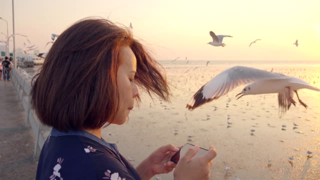 asian woman and seagull on the bridge - back lit stock videos & royalty-free footage